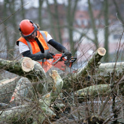 Tree Service Chainsaw